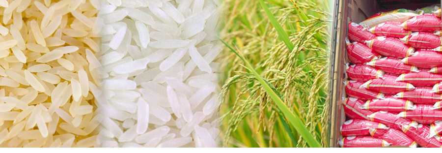 Raw rice white Exporter